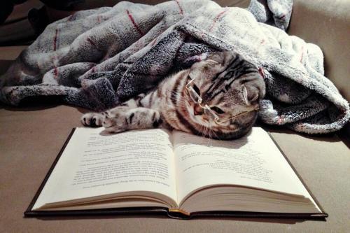ReadingCat